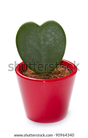 a cactus plant isolated on white background - stock photo