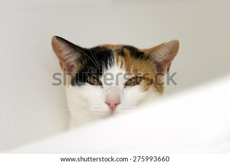 A Calico cat with green eyes is staring against a white background. - stock photo