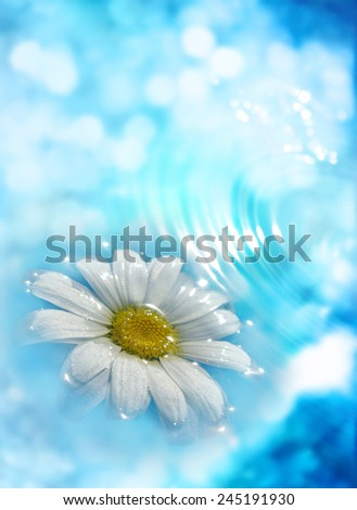 A camomile is in blue water - stock photo