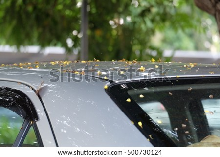 a car dotted with flowering trees
