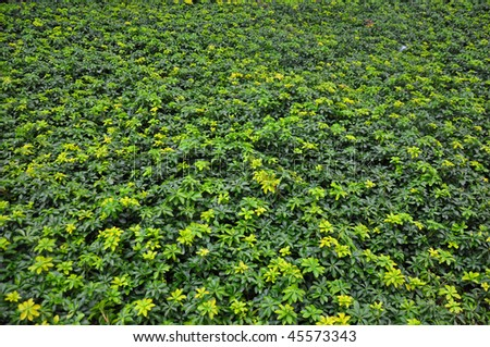 A Carpet of leaves and small plants - stock photo