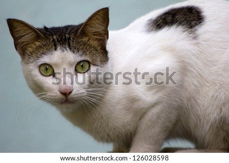 A cat and a stone wall - stock photo
