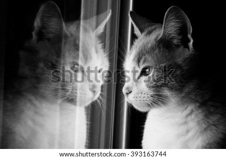 A cat and its reflection - stock photo