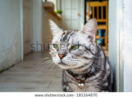 a cat at the door