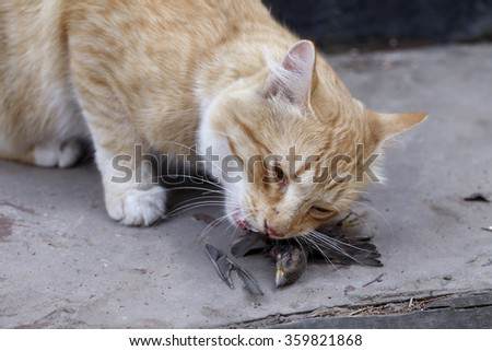 a cat caught a bird and eats its prey - stock photo