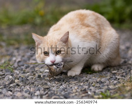 A cat caught his dinner. - stock photo