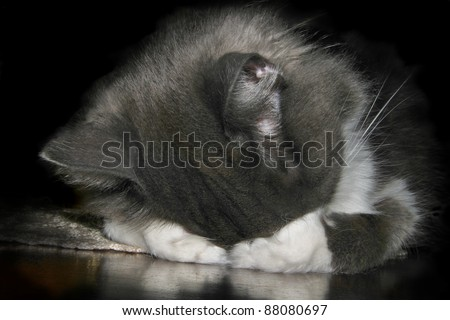 A cat covers his eyes while he sleeps.