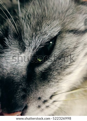 A cat eyes ,in the sleepy moment when some people going to disturb them.