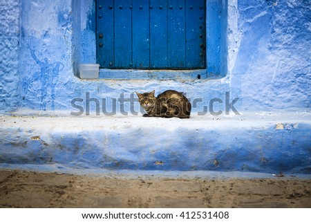 A cat in front of a door in Chefchaouen, Morocco.