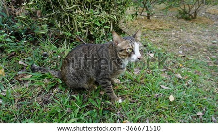 A Cat in The Grass Field Staring at Something - stock photo