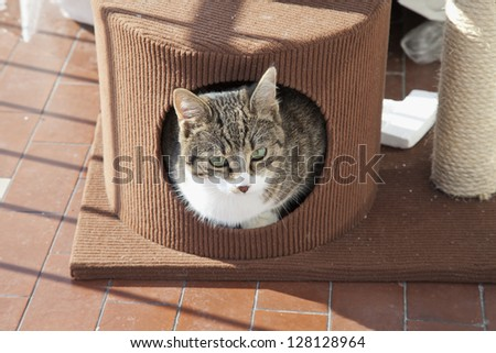 A cat inside a little brown house - stock photo