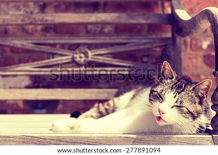 A cat is enjoying the warm sun on a wooden bench outdoors.It's tongue is sticking out. Selective focus, space for copy text. Photo with vintage style filter. - stock photo