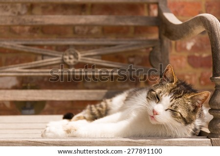 A cat is enjoying the warm sun on a wooden bench outdoors. Selective focus, space for copy text - stock photo