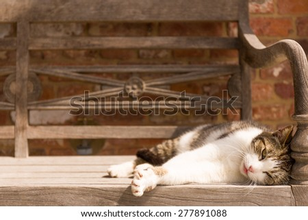 A cat is enjoying the warm sun while sleeping on a wooden bench outdoors. Selective focus, space for copy text. - stock photo