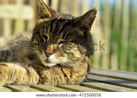 A cat is snoozing on a garden bench