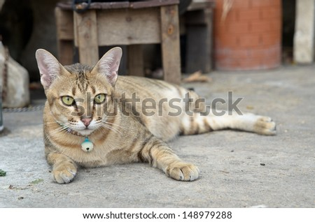 A cat laying on the ground - stock photo