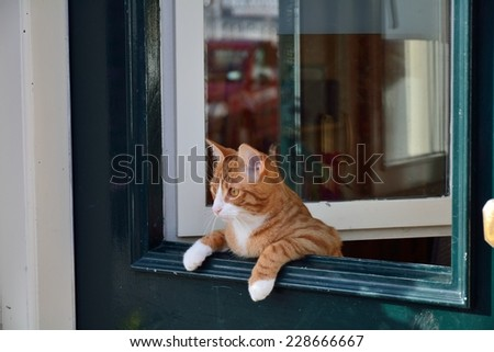A cat leaning over the green door.