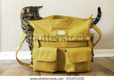 A cat looking inside of a purse - stock photo