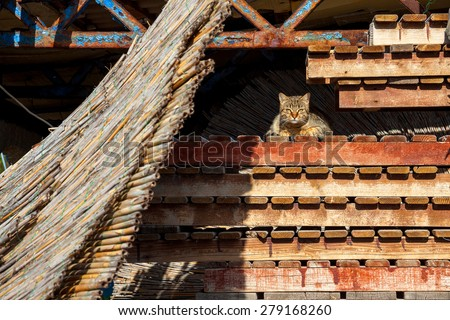 a cat lying at the wooden beach trays - stock photo
