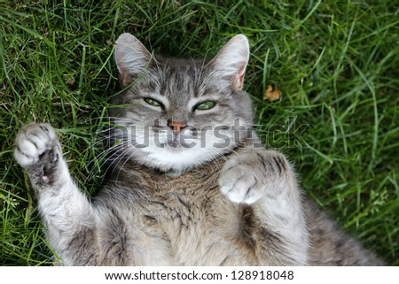 A cat lying in grass on her back - stock photo
