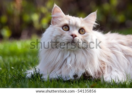 A cat lying in the grass and looking up.