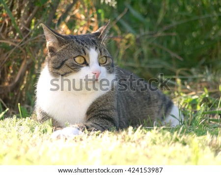A cat lying in the grass, looking excited.