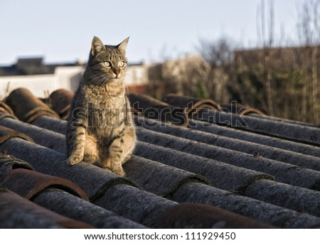 Cat On A Roof Stock Images Royalty Free Images Amp Vectors