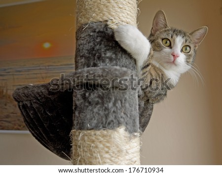 A cat on a scratching post. - stock photo