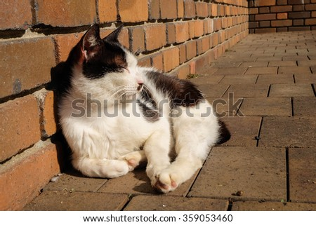 A cat on the brick floor