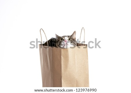 A cat peaking it's head out of a shopping bag on a white background. - stock photo