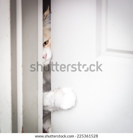 A cat peaking through a cracked door and sticking his paw through it. - stock photo