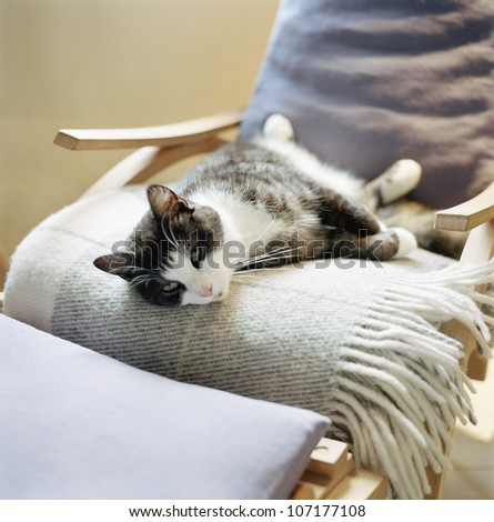 A cat resting in a chair, Skane, Sweden.
