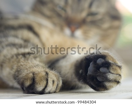 a cat's paw - stock photo