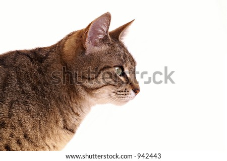 A cat's profile - stock photo