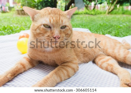 A cat sitting near a ball on  Purple and white background - stock photo