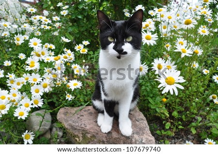 A cat sitting on the stone with daisy shrub