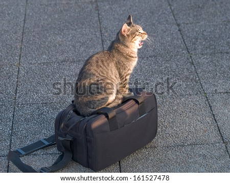 A cat sitting on top of a black overnight case. - stock photo