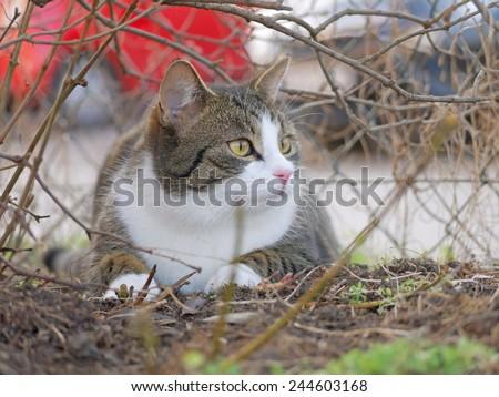 A cat sitting under a shrub.  - stock photo
