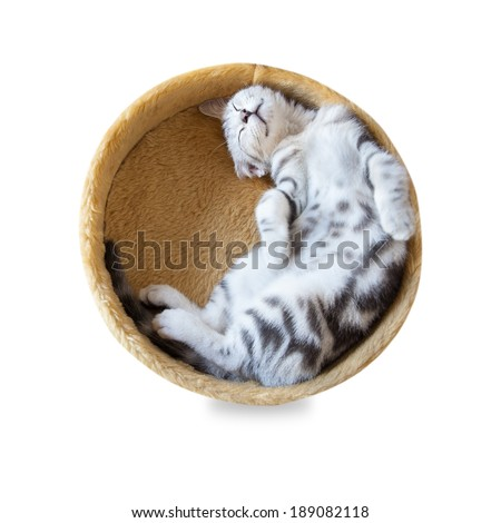 A cat sleep in the bucket isolated on white background - stock photo