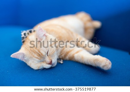 A cat sleep on blue sofa