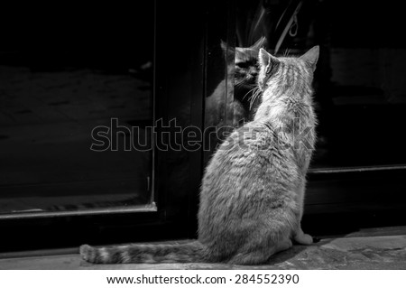 A cat staring at its own mirror reflection on a glass door, black and white - stock photo