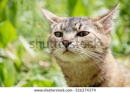 A cat walks in the nature and sniffs in search of prey - stock photo