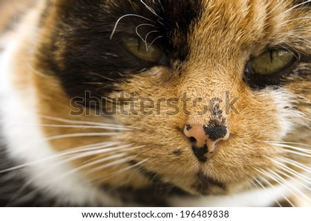 A cat with a speckled black and peach nose.