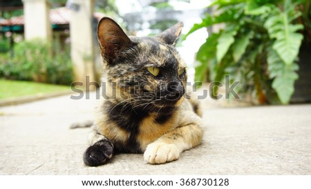 A cat with black and orange color leans on the floor looks at its left side. - stock photo