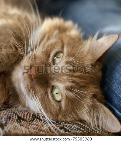 A cat with green eyes and thoughtful look lying near a man