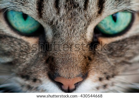 A cat with green eyes close-up - stock photo