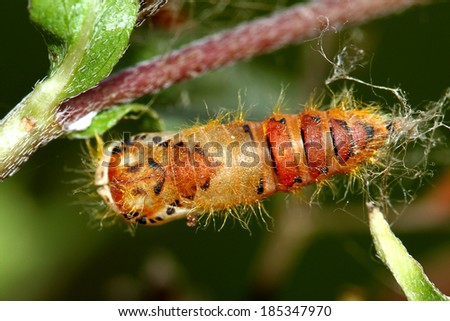 A caterpillar on branch - stock photo