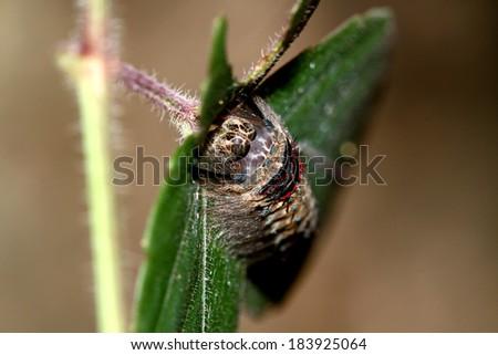 A caterpillar on leaf - stock photo