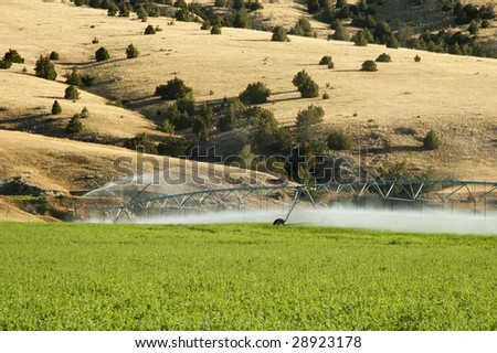a center pivot irrigation system working in an alfalfa field - stock photo