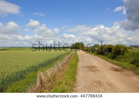 a chalky bridleway beside a wheat field and small copse in the yorkshire wolds under a blue cloudy sky